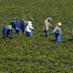 How-Credit-Agricole-Continues-to-Assist-Morocco's-Farmers-2-238x178.jpg