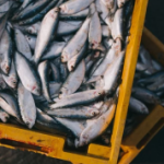 Morocco-to-Import-Fishery-Products-from-Brazil-238x178.png