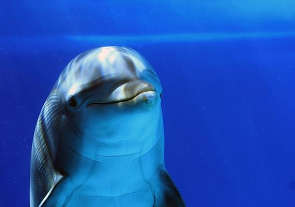 895485dolphin-s-smile-by-meppol-118090569895485.png